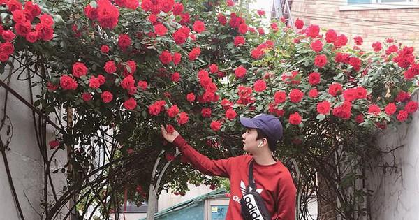 """""""Căn nhà với cánh cổng hoa hồng"""" đang được cư dân mạng chia sẻ mạnh vì lãng mạn không chịu nổi"""