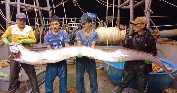 Thanh Hoá: Ngư dân bắt được cá hố khổng lồ nặng gần 1 tạ, 4 người mới nhấc lên nổi