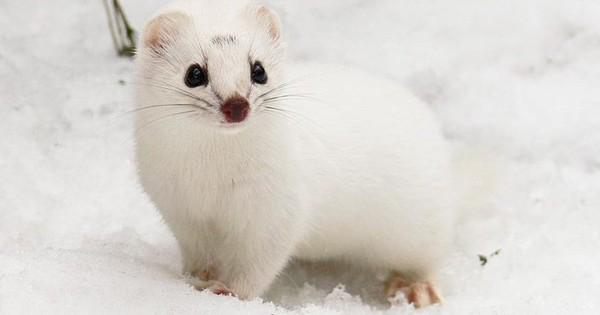Những bức ảnh động vật đẹp mê hồn trên khắp thế giới