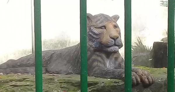 Con hổ bằng bê tông trong Thảo Cầm Viên bất ngờ nổi tiếng trên MXH vì biểu cảm xuất sắc