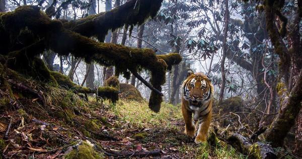 Một thế giới động vật đầy bí ẩn nhưng cũng đẹp ngỡ ngàng từ các nhiếp ảnh gia trong cuộc thi chụp Động vật hoang dã của năm