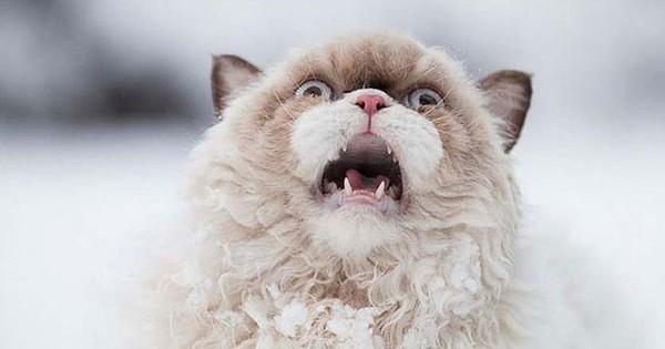 Biểu cảm hài hước của 15 boss khi lần đầu tiên được nghịch tuyết