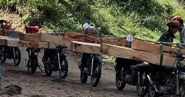 Gia Lai: Lâm tặc ngang nhiên vận chuyển gỗ lậu đi qua trạm quản lý rừng