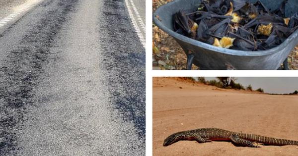 Khi nhiều nơi đang là mùa đông lạnh giá thì nước Úc lại chịu cảnh nắng nóng 50 độ, chảy cả nhựa đường