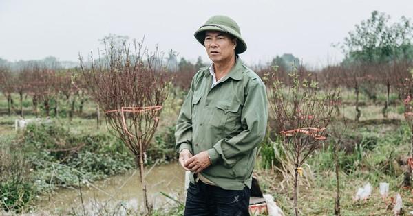 Gần 200 gốc đào của người dân Bắc Ninh bị chặt phá trong đêm: ''Tết năm nay còn chả có bánh chưng mà ăn''