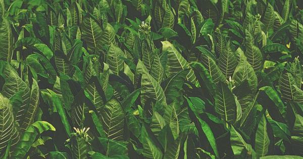 Phát hiện gây shock: Cây cối thực sự đang thét lên vì đau đớn, chỉ là chúng ta không thể nghe thấy