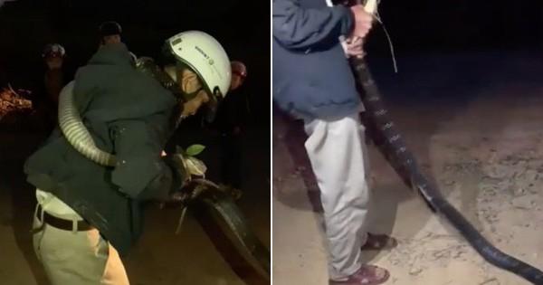 Người đàn ông bị con rắn dài cả mét cuốn chặt quanh người, cắn vào tay khiến nhiều người khiếp vía