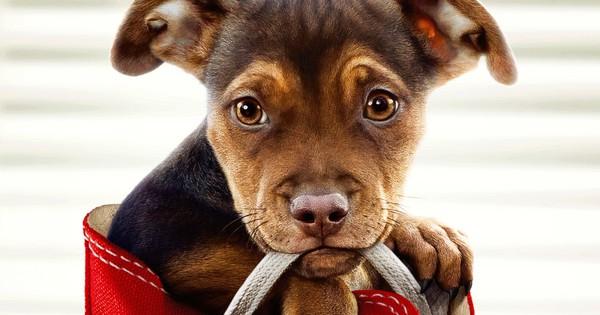 """A Dog's Way Home đốn tim các """"sen"""" bằng độ cute vô đối của chú cún Bella"""