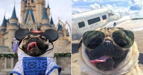Chú cún khiến cả thế giới ghen tị vì đi du lịch và check-in toàn những nơi sang chảnh