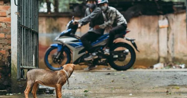 Nhóm bạn trẻ thực hiện bộ ảnh lên án nạn trộm chó khiến dân tình xôn xao