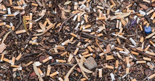 Cây cỏ trên thế giới đang chết dần chết mòn vì 4,5 NGHÌN TỈ đầu lọc thuốc lá xuất hiện mỗi năm