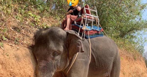Cô gái Việt chia sẻ hình ảnh chú voi mệt lả tựa vào vách đất, tự hứa sẽ không dùng dịch vụ này nữa