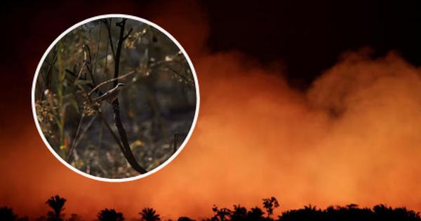 10% loài động vật trên hành tinh như sống trong 'hỏa ngục' vì cháy rừng Amazon: Hậu quả đáng sợ hơn bất kì vụ cháy rừng nào khác