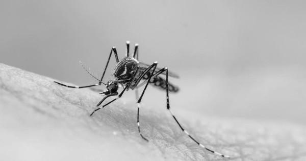 Còn nhớ khoa học đã dùng muỗi biến đổi gene để hủy diệt nòi giống của muỗi? Tưởng là giải pháp đột phá, ngờ đâu nhận ''phản dame'' cực gắt