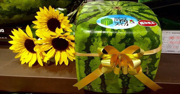 Những loại trái cây giá ''trên trời'', gấp cả trăm lần quả vải thiều Shintomi 240.000 đồng/quả, có loại cả trăm triệu đồng