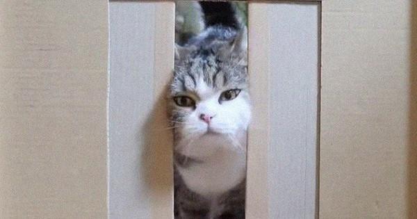 YouTuber bày trò ''lách khe cửa hẹp'' cho 2 boss, kiểm chứng xem mèo có làm từ... chất lỏng hay không