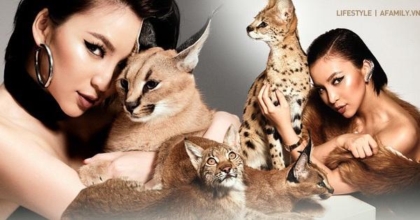Trang Hà - Cô gái mang những ''chú mèo'' trị giá hàng tỷ đồng về Việt Nam và tiết lộ trào lưu nuôi thú cưng mới của giới đại gia và siêu giàu tại Sài Gòn