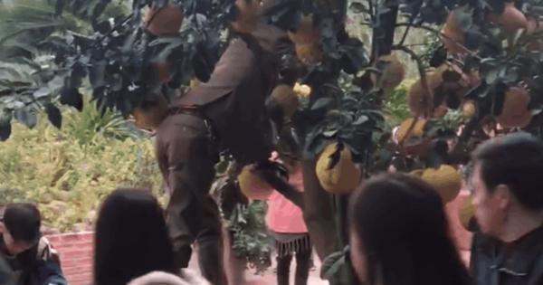 Clip: Người đàn ông trèo lên chậu cây bưởi trong chùa, thản nhiên đu vịn tạo dáng chụp ảnh