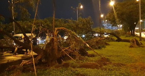 Mưa to gió lớn như bão, hàng chục cây xanh bật gốc ở Sài Gòn