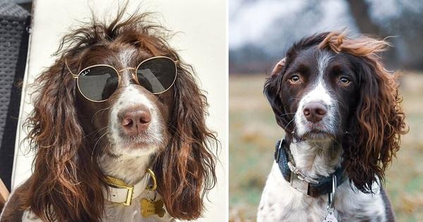 Chú chó gây sốt MXH khi sở hữu mái tóc xoăn dài như siêu sao nhạc rock, nhưng đôi mắt lại mơ màng như tài tử điện ảnh