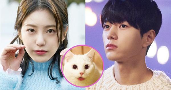 Meow, the Secret Boy ''ăn điểm'' fan Kpop vì đem fanfic ''mèo hóa người'' ra đời thực, thêm cả combo mỹ nam cực phẩm đóng chính?