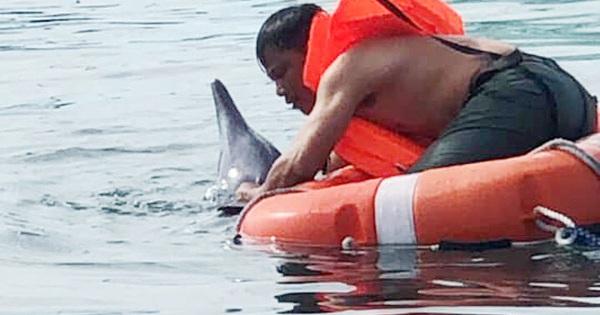 Cứu hộ thành công chú cá heo dạt vào bờ biển Đà Nẵng