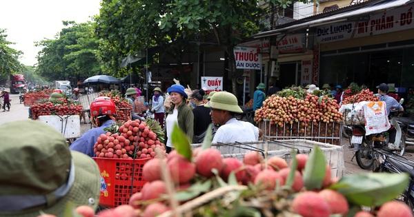 """Người dân Bắc Giang tấp nập đi bán vải thiều chín mọng: """"Chăm sóc cả năm chỉ chờ ngày này''"""