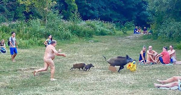 Câu chuyện phía sau hình ảnh người đàn ông ''tồng ngồng'' đuổi nhau với lợn lòi quanh công viên