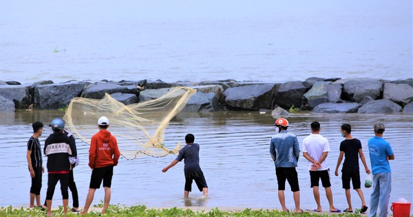 Sau bão, người dân Đà Nẵng ra các miệng cống xả, cửa sông quăng chài bắt cá ''khủng''