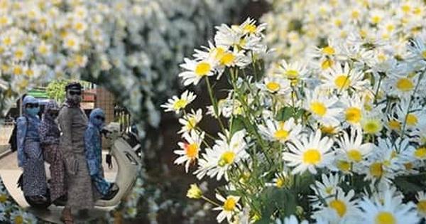 Tin thời tiết 25/11: Hoa mùa đông đã nở, người vẫn ná thở trong ''giáp ninja'' chống nắng