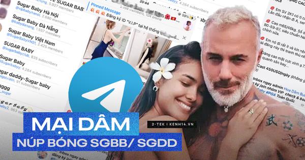 Telegram như một ổ tệ nạn: tràn lan hội nhóm tìm Sugar Baby, Sugar Daddy đến các động 'chào giá, share số' trá hình!