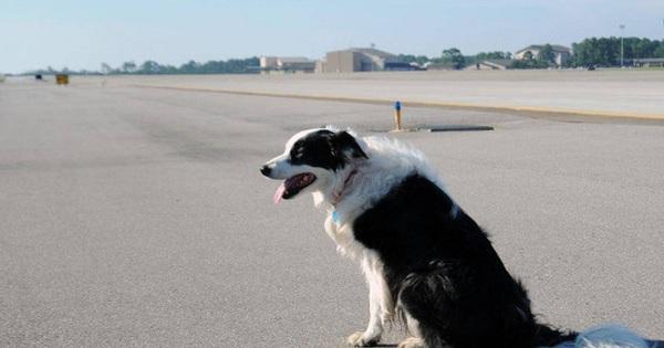 Chó ''đột nhập'' sân bay ở Thanh Hóa, máy bay phải chờ hạ cánh