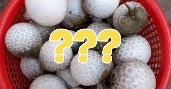 Đi biển thấy loại 'quả' lạ tròn xoe như trái bóng, thanh niên lên mạng đố vui làm netizen hú hồn khi phát hiện ra sự thật