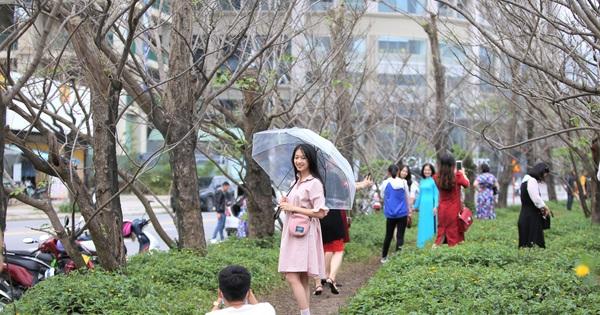 Người dân đổ xô đến check in ''con đường mùa đông'' đẹp như trong phim Hàn ở Đà Nẵng