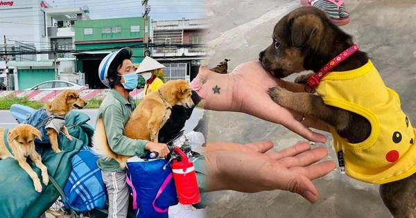 Vụ đàn chó 15 con bị tiêu huỷ: 1 chú cún may mắn sống sót, người chủ mới khẳng định 'sẽ tặng lại vì nó là 1 phần kỷ niệm của cô chú'