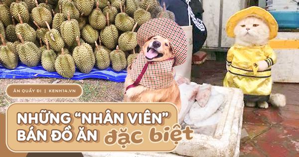 Đã nhiều lần dân mạng 'quắn quéo' vì những chú chó, mèo bán đồ ăn, ấn tượng nhất là 'anh' mèo của Việt Nam từng nổi tiếng thế giới