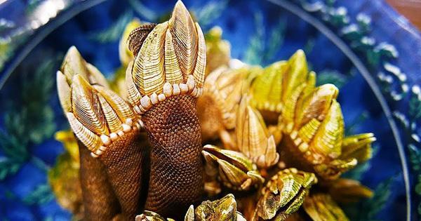 Loài ốc có tên lẫn ngoại hình ghê rợn, nguy hiểm khi đánh bắt nhưng rất nổi tiếng ở Nhật