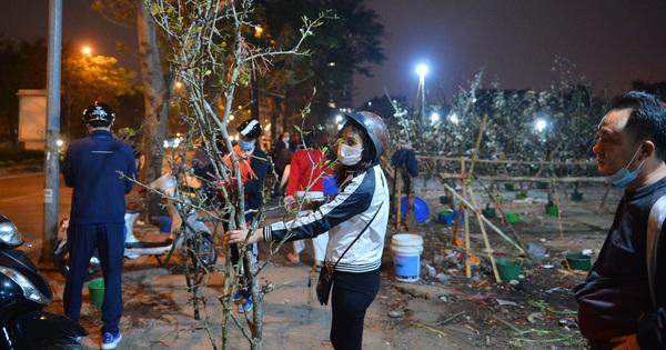 Người Hà Nội rộ mốt chơi hoa lê tiền triệu sau Tết, chuyên gia lên tiếng: ''Nên cấm việc chặt lê rừng''