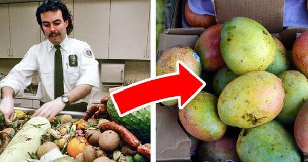 Chuyện gì xảy ra với đồ ăn bị tịch thu vì không được phép mang lên máy bay?