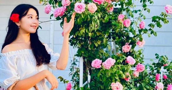 Sở hữu vườn hồng cả trăm gốc, bà xã Quyền Linh chia sẻ bí quyết trồng hoa ít sâu bệnh, đẹp phát hờn