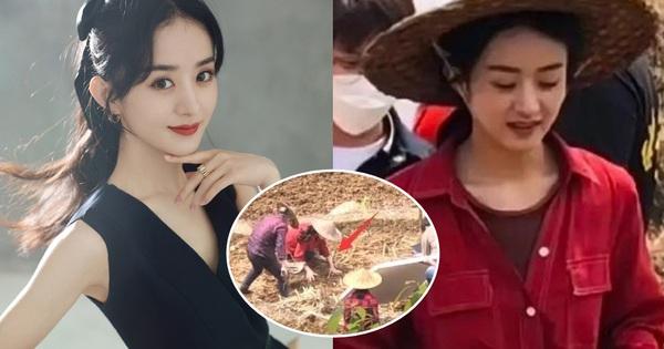 Netizen mắng Triệu Lệ Dĩnh 'quên nguồn cội' vì không biết cày ruộng ở phim mới, visual bắt nắng cũng chả cứu nổi?
