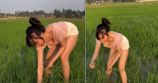 Bà Tưng bị 'ném đá' vì đăng video đi ra đồng nhưng lại để lộ vòng 1 hớ hênh