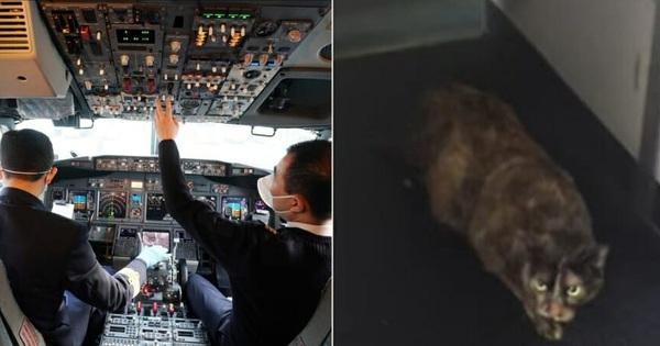 Trùm cuối của loài mèo: Mò lên máy bay tấn công cơ trưởng khiến phi hành đoàn phải hạ cánh khẩn cấp