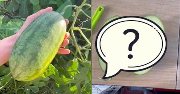 Lén trồng trái dưa hấu bên vệ đường, tới ngày thu hoạch, thanh niên hí hửng mang vào nhà xẻ ra ăn và 'té ngửa' vì thứ bên trong