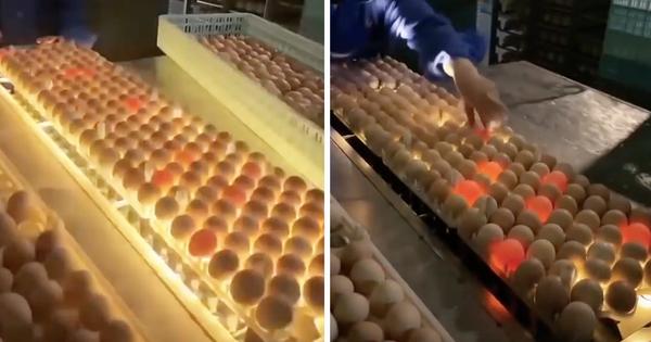 Đây là cách người ta phát hiện trứng hỏng giữa hàng nghìn quả trong nhà máy, xem xong ước gì nhà cũng có một cái máy này!