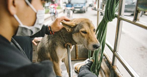 Hành trình một chú chó hoang từng bị bắt, đánh đập đến 'bến đỗ' trong ngôi nhà hạnh phúc cho chó mèo ở Hà Nội