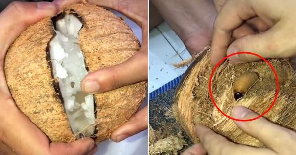 Mua dừa sáp về ăn, cô gái 'trúng số độc đắc' khi phát hiện thứ này nằm trong vỏ