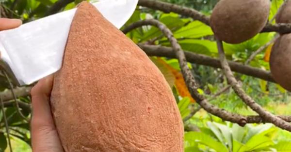 Việt Nam có loại trái cây cực quen thuộc nhưng lại nằm trong danh sách 'những loại quả lạ nhất thế giới', bạn từng ăn thử chưa?