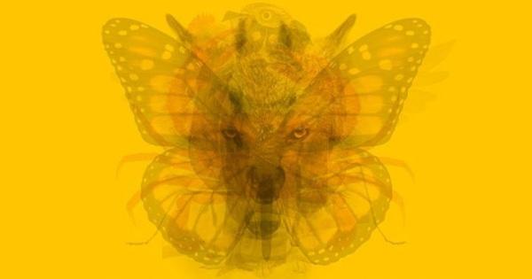 Nhìn thấy con vật nào đầu tiên tiết lộ bạn có cứng đầu, kén chọn hay tự tin không!