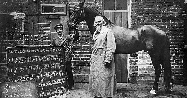 Đây là Hans - chú ngựa từng gây bão lịch sử nhân loại: Biết làm toán, 'nói' được tiếng Đức và có một cái kết buồn